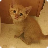 Adopt A Pet :: Dorito - White Bluff, TN