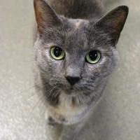 Adopt A Pet :: Squirrel - Lynchburg, VA