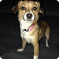 Adopt A Pet :: Paris II in RI  COME MEET ME!! - Providence, RI