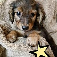 Adopt A Pet :: 6 Snoopy - Colton, CA