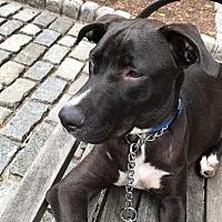 Adopt A Pet :: Johnny - Manhattan, NY