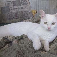 Adopt A Pet :: Monroe - Quail Valley, CA