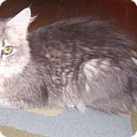 Adopt A Pet :: Claudia - Gray, TN
