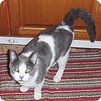 Adopt A Pet :: Jersey - Chandler, AZ