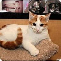 Adopt A Pet :: Wesley - Farmingdale, NY