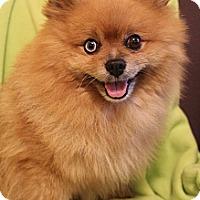 Adopt A Pet :: Frankie - Wytheville, VA
