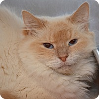 Adopt A Pet :: Pennelope - Columbus, OH