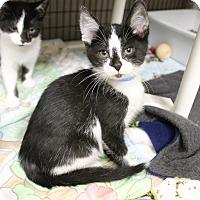 Adopt A Pet :: Smudge - Medina, OH