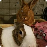 Adopt A Pet :: Iris & Harvey - Watauga, TX