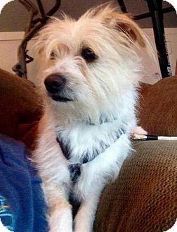 Terrier (Unknown Type, Medium) Mix Dog for adoption in Portland, Oregon - Leo