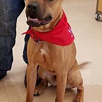 Adopt A Pet :: Thibodeau - Newcastle, OK