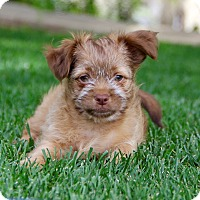 Adopt A Pet :: Nelson - San Diego, CA