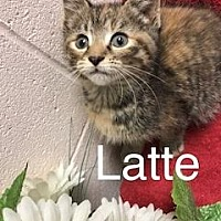 Adopt A Pet :: Latte - Salem, WV