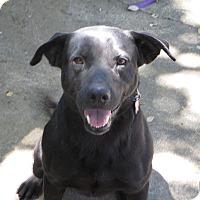 Adopt A Pet :: GILBERT - Vancouver, BC