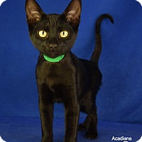 Adopt A Pet :: Chester - Carencro, LA