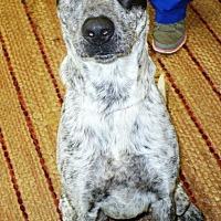 Adopt A Pet :: Callie - Eastpoint, FL