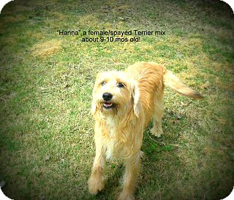 Terrier (Unknown Type, Medium) Mix Dog for adoption in Gadsden, Alabama - Hanna