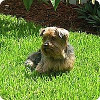 Adopt A Pet :: Butler - Beechgrove, TN