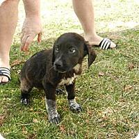 Adopt A Pet :: Hershey - Marlton, NJ
