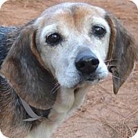 Adopt A Pet :: Faith - Athens, GA