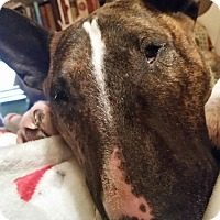 Adopt A Pet :: Bobbi-Louisville, MS - Glenwood, AR