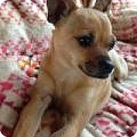 Adopt A Pet :: Corvette - Mt Gretna, PA