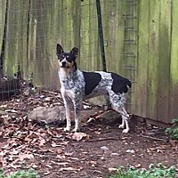 Adopt A Pet :: Miller #837 - Nixa, MO