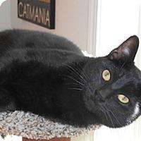Adopt A Pet :: Jigglipuff - North Highlands, CA