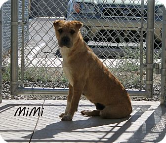Shar Pei Mix Dog for adoption in Edgewood, New Mexico - Mimi