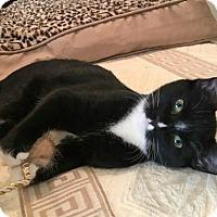 Adopt A Pet :: Olso - Westwood, NJ