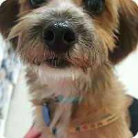 Adopt A Pet :: Sammie - La Mirada, CA