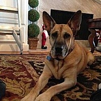 Adopt A Pet :: Cali - Santa Ana, CA