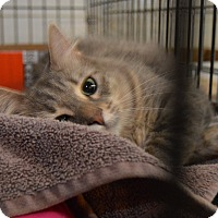 Adopt A Pet :: Sister - Westfield, MA