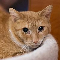 Adopt A Pet :: Destiny - Toronto, ON