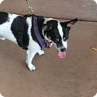 Adopt A Pet :: Giff aka Tyke - Las Vegas, NV
