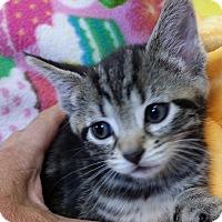 Adopt A Pet :: Roy - Berlin, CT