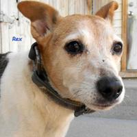 Adopt A Pet :: Rex - Oskaloosa, IA