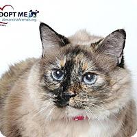 Adopt A Pet :: Arya - Alexandria, VA