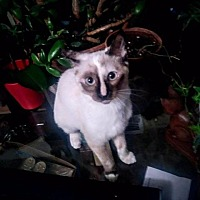 Adopt A Pet :: Q-Tip - Corinne, UT