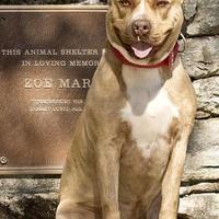 Adopt A Pet :: Otis - Cashiers, NC