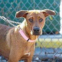 Adopt A Pet :: Emerald - Marietta, GA