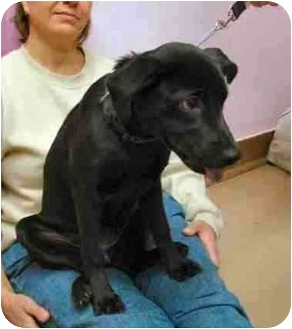 Terrier (Unknown Type, Medium) Mix Dog for adoption in Clifton, New Jersey - EBONY