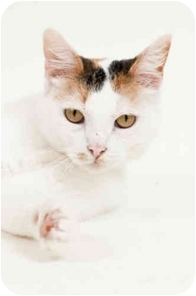 Calico Cat for adoption in Panora, Iowa - Alice