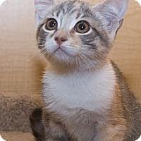 Adopt A Pet :: Kate - Irvine, CA