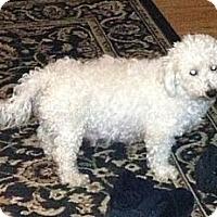 Adopt A Pet :: Winter - Hilliard, OH