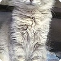 Adopt A Pet :: Eureka - St. Petersburg, FL