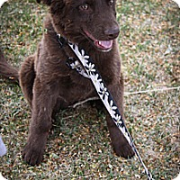 Adopt A Pet :: Whiskey River - Broomfield, CO