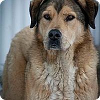 Adopt A Pet :: Bo - Cambridge, IL