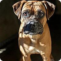 Adopt A Pet :: Lucky - Alexandria, VA