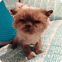 Adopt A Pet :: Be - Beverly Hills, CA